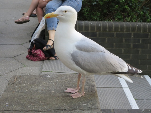 Image of seagull